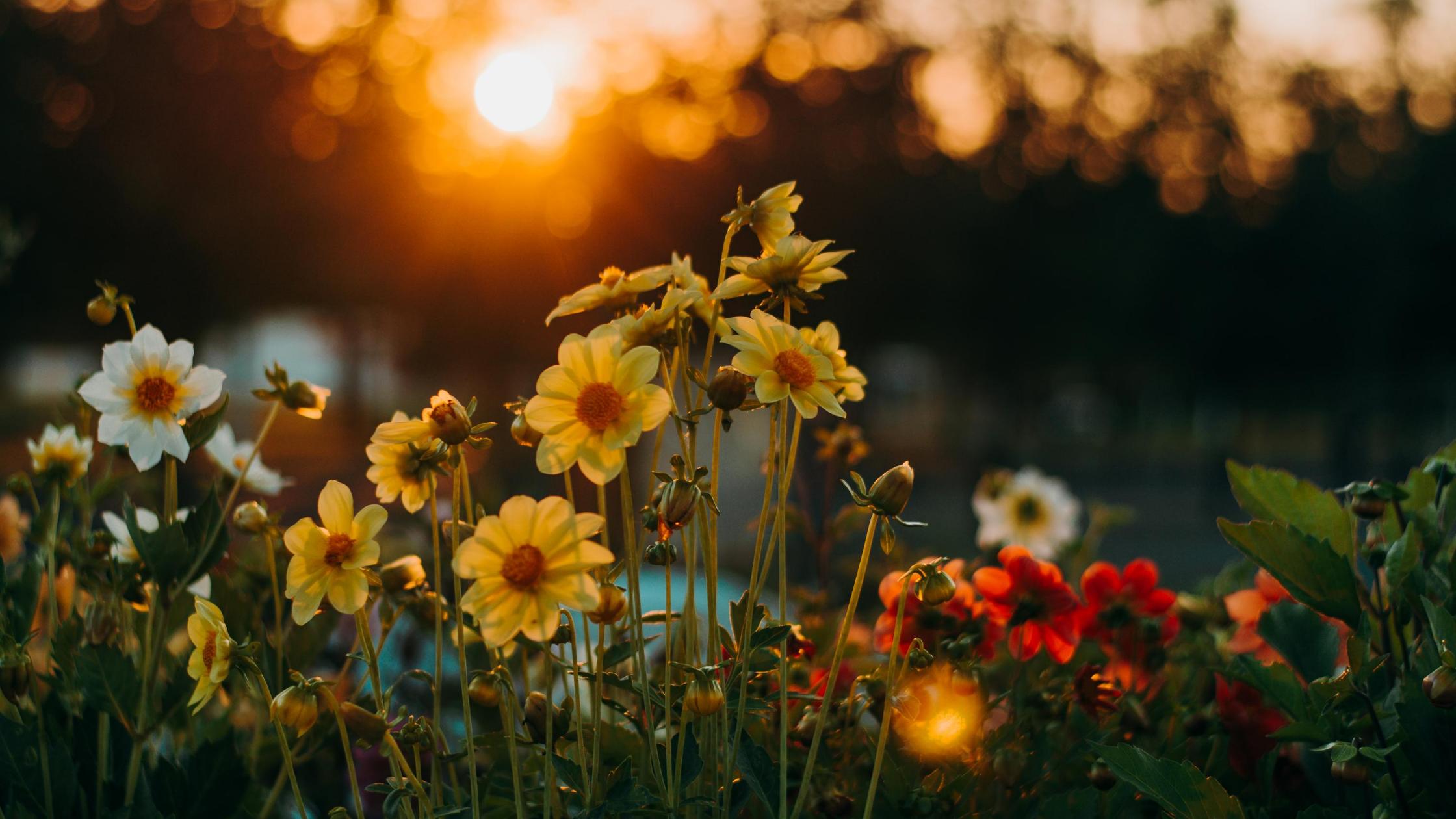 Книги про цветочный бизнес